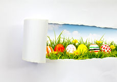 Oeufs de pâques. Image stock