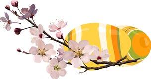 Oeufs de pâques avec la fleur de cerise Photos stock