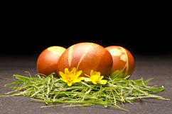 Oeufs de pâques avec la fleur jaune Photographie stock libre de droits