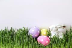Oeufs de pâques avec les lièvres décoratifs dans l'herbe verte fraîche sur b blanc Photographie stock libre de droits