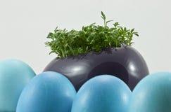Oeufs de pâques bleus avec le cresson frais Photos libres de droits