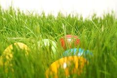 Oeufs de pâques cachés dans des lames d'herbe verte d'herbe Photos libres de droits