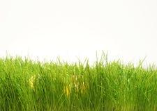 Oeufs de pâques cachés dans l'herbe de lames d'herbe verte Photos libres de droits