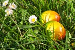 Oeufs de pâques cachés dans l'herbe verte Photos libres de droits