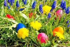 Oeufs de pâques colorés avec des fleurs de source Image stock