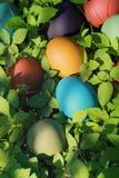 Oeufs de pâques colorés en nature Images libres de droits