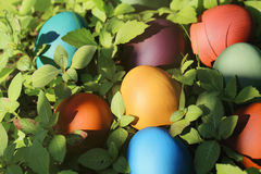 Oeufs de pâques colorés en nature Image stock