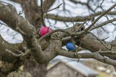 Oeufs de pâques colorés sur un arbre images stock