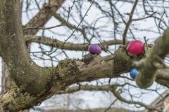 Oeufs de pâques colorés sur un arbre photo stock