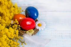 Oeufs de pâques colorés sur un plat blanc sous forme de coeurs et fleurs de mimosa sur une table en bois bleue Fin vers le haut c Photos stock