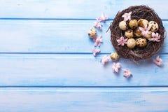 Oeufs de pâques décoratifs en nid et fleurs roses tendres Photos stock