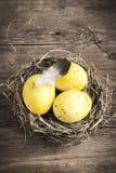Oeufs de pâques dans l'emboîtement Photo libre de droits