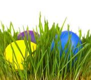 Oeufs de pâques dans l'herbe verte Photo stock
