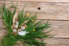 Oeufs de pâques dans l'herbe verte Photographie stock