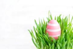 Oeufs de pâques dans l'herbe verte d'isolement sur le fond blanc heureux Photos stock