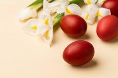 Oeufs de pâques dans le nid blanchâtre et les fleurs blanches Photos stock