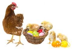 Oeufs de pâques dans un panier et poulets avec une poule Images stock