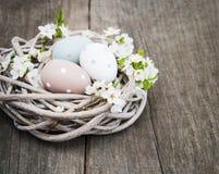Oeufs de pâques et fleur de ressort Photos libres de droits