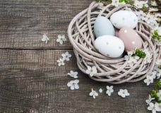 Oeufs de pâques et fleur de ressort Image stock