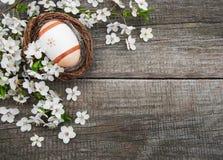 Oeufs de pâques et fleur de ressort Image libre de droits
