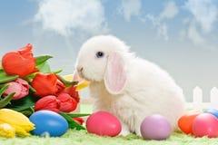 Oeufs de pâques et lapin blanc Photo stock