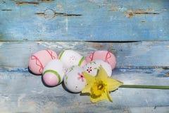 Oeufs de pâques et narcisse roses sur un fond en bois bleu Images stock
