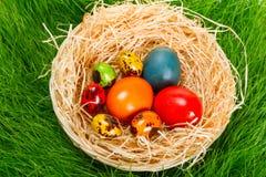 Oeufs de pâques peints colorés dans le nid Images libres de droits