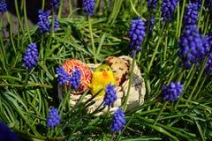 Oeufs de pâques peints colorés sur un panier sur une herbe verte Image libre de droits