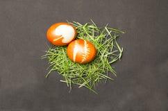 Oeufs de pâques peints sur l'herbe Images libres de droits