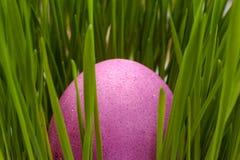Oeufs de pâques roses sur une herbe verte Images stock