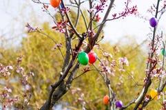 Oeufs de pâques sur l'arbre Photos libres de droits
