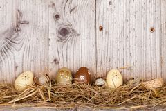 Oeufs de pâques sur le bois Images libres de droits