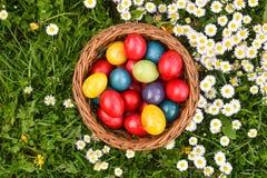 Oeufs de p?ques color?s dans l'herbe verte avec les fleurs blanches de ressort image stock
