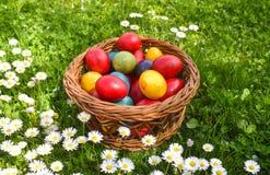Oeufs de p?ques color?s dans l'herbe verte avec les fleurs blanches de ressort image libre de droits