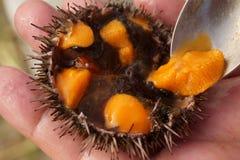 Oeufs de poisson de l'oursin Photographie stock libre de droits