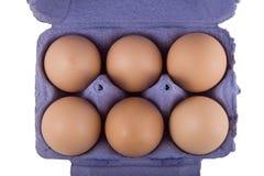 Oeufs de poules de Brown dans le carton bleu d'oeufs Photos libres de droits