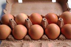 Oeufs de poulet Photographie stock libre de droits