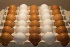 Oeufs de poulet Photographie stock