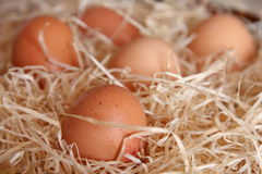 Oeufs de poulet Image stock
