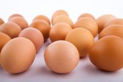 Oeufs de poulet de Brown avec un certain espace entre chacun sur un fond blanc image libre de droits