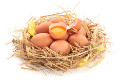 Oeufs de poulet dans le nid de la paille images libres de droits
