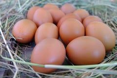 Oeufs de poulet dans le nid de la paille sur le vieux fond en bois images stock
