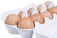 Oeufs de poulet dans un conteneur de carton Photos stock