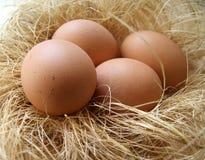 Oeufs de poulet dans un emboîtement Photos libres de droits
