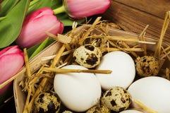 Oeufs de poulet et de caille avec des tulipes le fond a coloré le vecteur rouge de tulipe de format des oeufs de pâques eps8 Images libres de droits