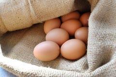 Oeufs de poulet/poule dans la toile à sac Photos libres de droits