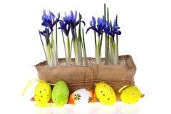 Oeufs et fleurs de pâques Photographie stock
