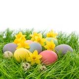 Oeufs et fleurs de pâques dans l'herbe au-dessus du blanc Photos libres de droits
