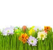 Oeufs et fleurs de pâques dans l'herbe verte Photos stock