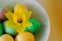 Oeufs et jonquille de pâques verts et jaunes Photo stock